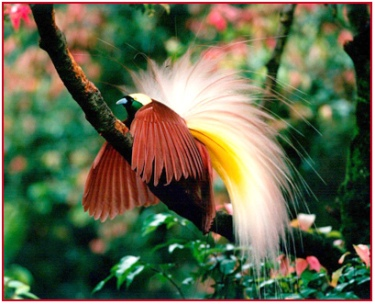830 Gambar Burung Cendrawasih Di Pohon Terbaik